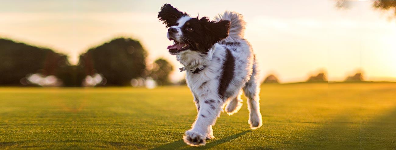 Articoli per il cane