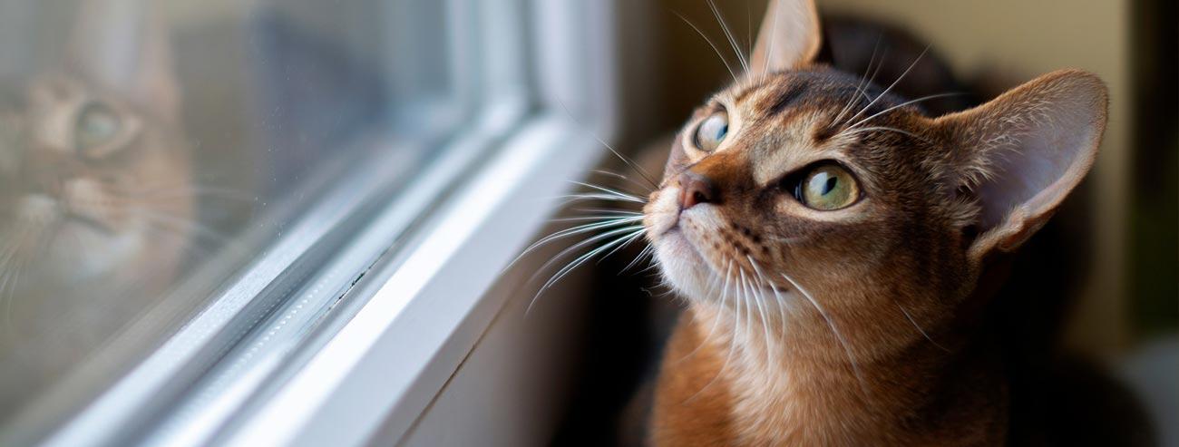 Articoli per il gatto